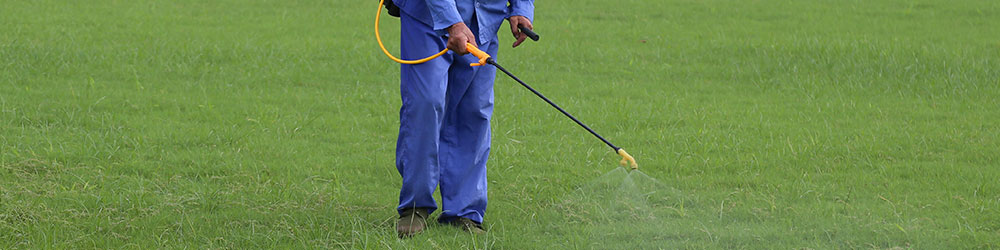 Preventive Pest Control in Houston