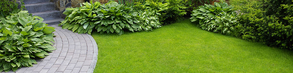 Houston Lawn Care Services