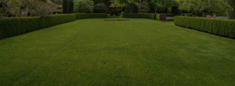 Houston lawn and landscape service