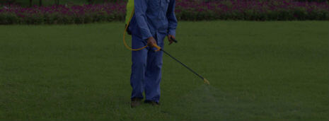 Houston lawn maintenance and landscaping