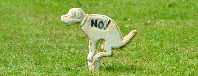 how to stop dog urine from killing grass