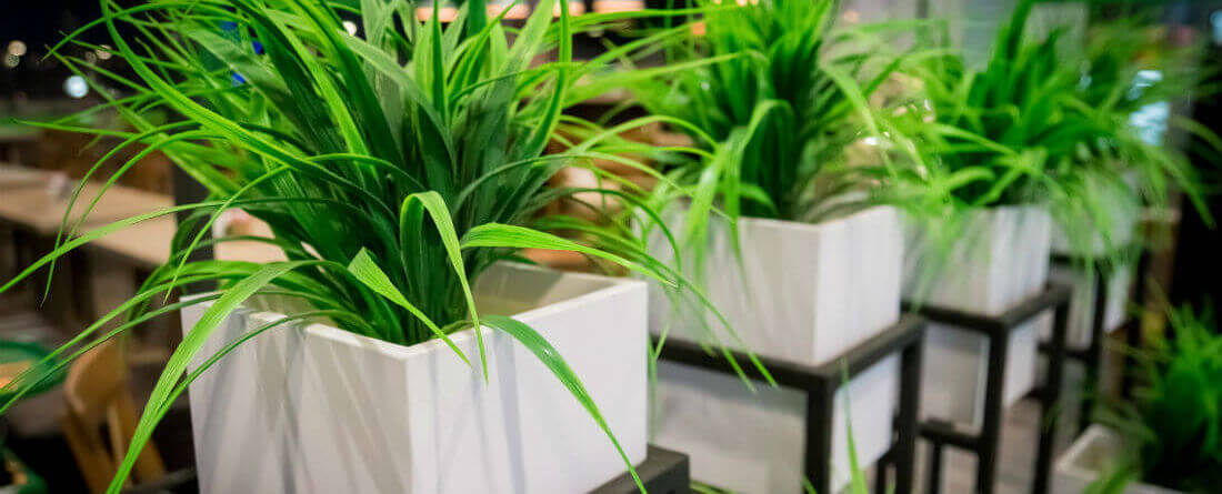 best indoor landscaping plants