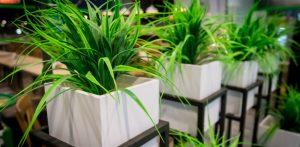 indoor landscaping plants