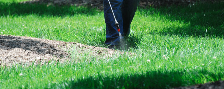 Get Rid of Crabgrass