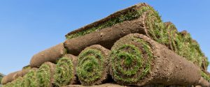 when is the best time to lay sod?