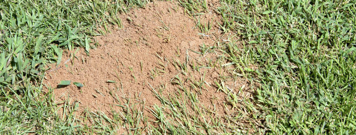 Fire Ant Bug Control in Texas