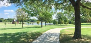 Best Grass for Shade in Texas
