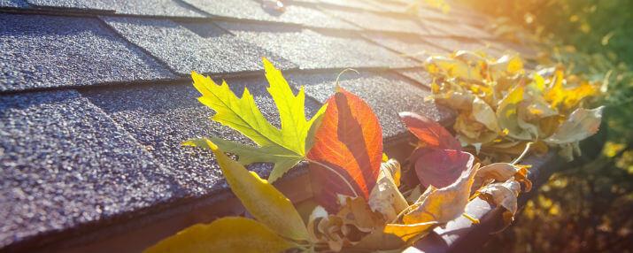 Fall Yard Leaf Removal Houston