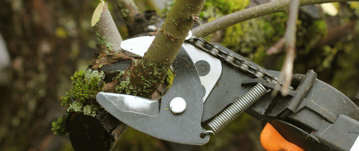 Importance of Pruning Plants