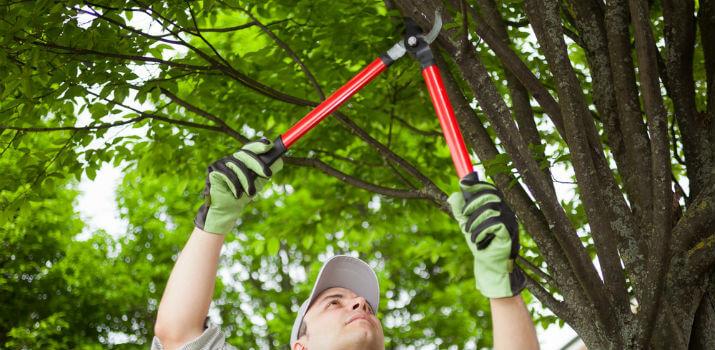 How do we prune plants?