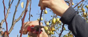 When to Prune Plants and Trees