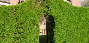 Landscape Privacy Screen Plants from Neighbors