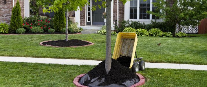 When to put down mulch in Houston