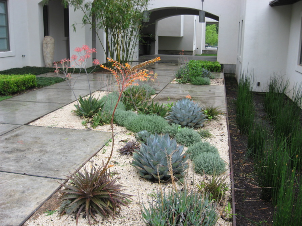 Succulents Landscaping Idea