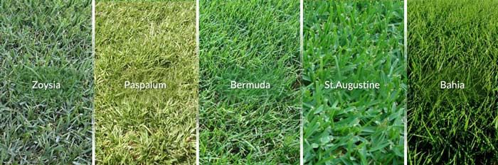 Different Types of Common Lawn Grasses in Houston