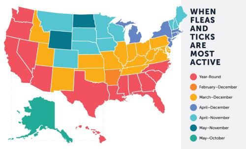 Fleas Infestation Map